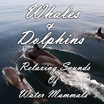 Whales and Dolphins: Relaxing Sounds of Water Mammals