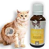 EMMA digestivo para Gatos I para una digestión óptima con alcaravea e hinojo I para una Flora intestinal Sana después de la diarrea, Cambio de alimento 30 ml