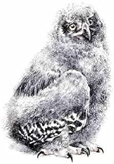 robert bateman snowy owl print