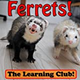 Ferrets! Learn About Ferrets And Learn To Read - The Learning Club! (45+ Photos of Ferrets) (English Edition)