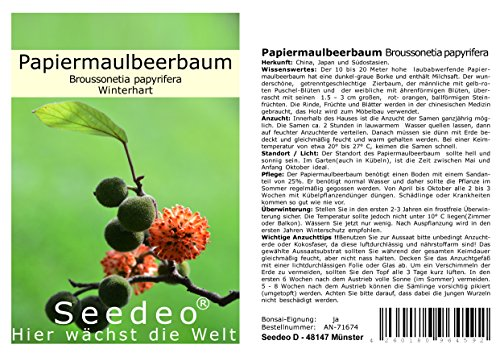 Seedeo® Papiermaulbeerbaum (Broussonetia papyrifera) 100 Samen