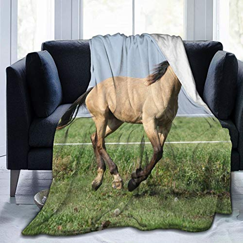 DAHALLAR Throw Blanket Lightweight Soft Warm,Palomino Quarter Horse Running On Pasturage In Autumn,Microfiber All Season Living Room/Bedroom/Sofa Couch Bed Flannel Quilt,50' x 60'
