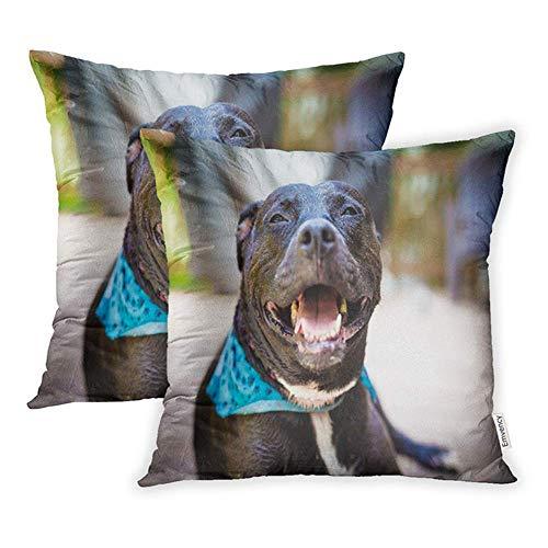 okstore1988 Juego decorativo de 1 funda de almohada de 45 x 45 cm, diseño de Pitbull americano con bandana, color azul, cuadrado, para el hogar, sofá, una cara