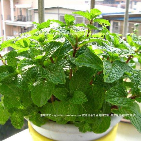 050601 pots de graines de fleurs planteurs arbre fruits bonsaï légumes maison arc-en-bulbes de jardin décoratif 1000pièces / lot