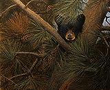 High and Lonesome by Derek Hansen Wildlife Animal Black...