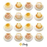 Finoly Conchas de Vieira Natural Grandes Pack 4/8/12/16 unidades para Cocina Decoración Manualidades
