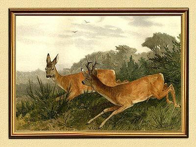 Kunstdruck Treibender Rehbock Jagdbild Rehgeiß Wild Deiker Wilderer A3 556 Gerahmt