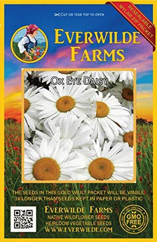 Everwilde Farms - 2000 Ox-Eye Daisy Wildflower Seeds - Gold Vault Jumbo Seed Packet
