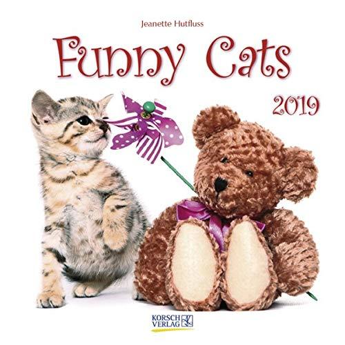 Funny Cats (BK) 227719 2019: Broschürenkalender mit Ferienterminen. Lustige Bilder von Katzen. 30 x 30 cm