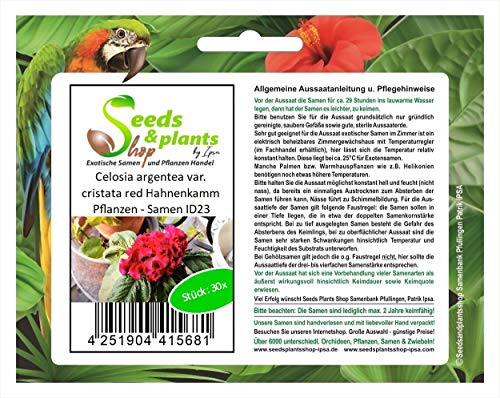 Stk - 30x Celosia argentea var. cristata red Hahnenkamm Pflanzen - Samen ID23 - Seeds Plants Shop Samenbank Pfullingen Patrik Ipsa