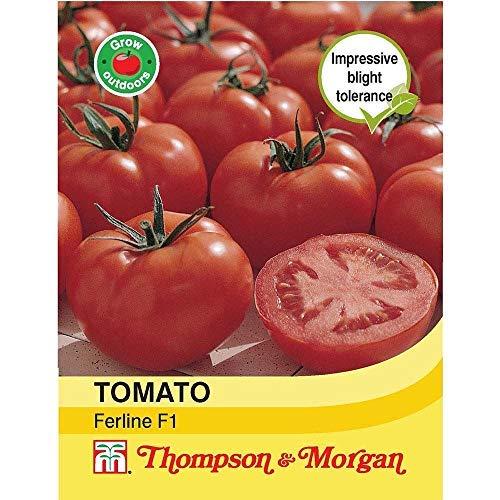 Thompson & Morgan - Verduras - Tomate Ferline F1 Híbrido - 12 Semilla