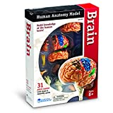 LEARNING RESOURCES MODEL BRAIN ANATOMY (Set of 6)