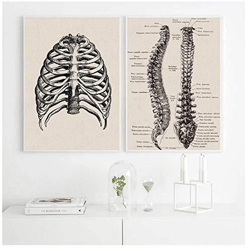 DLFALG Obra de arte de anatomía humana Imagen de pared médica Esqueleto muscular Póster Vintage Impresión de lienzo nórdico Pintura educativa Decoración de oficina-40x50cmx2 Sin marco