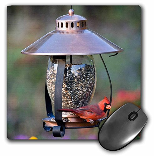 Northern Cardinal op koperen lantaarn Hopper Bird Feeder, Marion Co. Il – muispad, 8 van 20,3 cm (MP 208643 1)