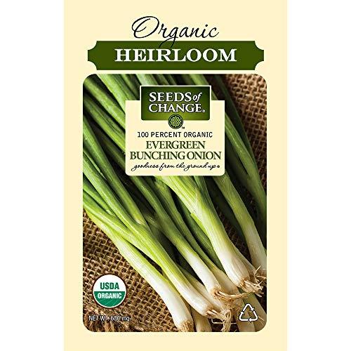 Seeds Of Change 8225 Evergreen Bunching Onion, Green