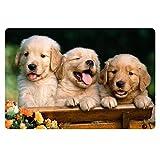 Coloranimal - Felpudo antideslizante para exteriores, Fieltro, Perro cachorro, 40 x 60 cm