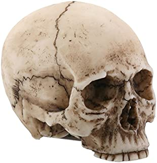 YTC 2.25 Inch Resin Realistically Painted Collectible Skull Head, Small