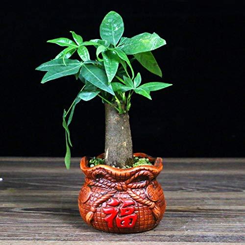 Récipients pour plantes de jardin Plante verte en céramique Pot de fleurs en céramique Pot Rouge maison Pot de fleurs de bureau Petite plante en pot de fleur riche Arbre Pot de fleurs Pots de fleurs