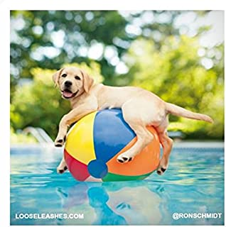 Ducky The Pool Boy Loose Leashes Greeting Card Blank Inside Any Occasion