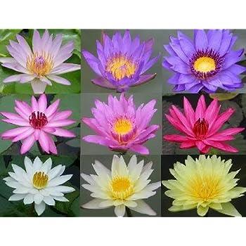 Fabric Personalized Lotus Flowers Passport Holder