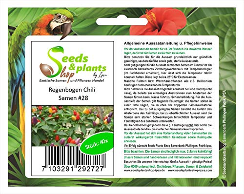 Stk - 40x Regenbogen Chili Numex Twilight Bolivien Pflanzen - Samen #28 - Seeds Plants Shop Samenbank Pfullingen Patrik Ipsa