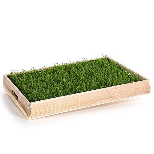 Miau Katzengras inklusive Dekotablett'Pure Nature'   60x40cm echtes, saftiges Gras   sofort nutzbar - kein aussäen   (Pure Nature)