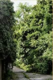 Ailanthus altissima : Une monographie située de l'ailante: Un inventaire photographique sur le développement spontané des ailantes dans l'espace urbain