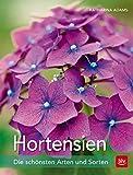 Hortensien: Die schönsten Arten und Sorten