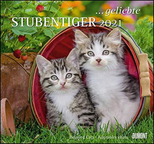 ... geliebte Stubentiger 2021 - DUMONT Wandkalender - mit den wichtigsten Feiertagen - Format 38,0 x 35,5 cm