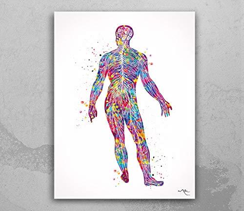 Sistema nervioso masculino con impresión de acuarela sistem