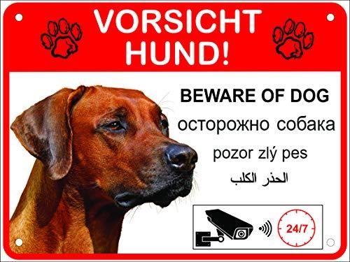 LUGUNO Hundeschilder Warnung 5-sprachig Vorsicht Hund Schild Alu (20x15cm - Rhodesian Ridgeback)