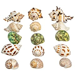 "YOU WILL RECEIVE - an assortment of Small Shells: (3) Babylonia Aerolata (3) King Crown (3) Natica Tigrina (3) Black Murex and (3) Green Turbo, plus a complimentary PDF copy of ""A Practical Guide for Nautical Décor"" eBook by Joseph Rains (delivered b..."