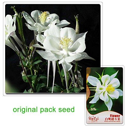 """Pack Aquilegia /""""McKanas GIANT /'Mélange Vivace Jardin Graines de FLEURS King/'s Seeds"""