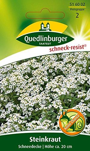 Duft-Steinrich, Steinkraut, Alyssum maritimum, ca. 200 Samen