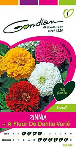 Gondian 166845 Semences - Zinnia à Fleur de Dahlia Varie - CP 1, Multicolore, 1x8.1x16 cm