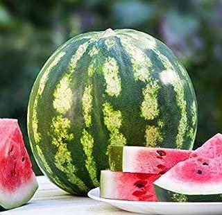 Crimson Sweet Watermelon Seeds, 150+ Premium Heirloom Seeds, 1 Selling Watermelon & ON SALE!, (Isla's Garden Seeds), Non Gmo Organic, 85% Germination Rates, Highest Quality Seeds, 100% Pure