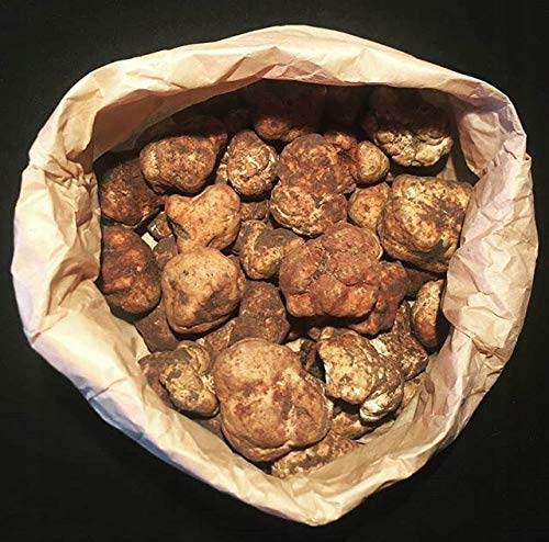 Wilde Tuber Magnatum weiße Trüffel frische Pilze, 500 g