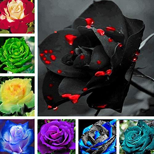 Semi di rosa, 200 pezzi colorati fiori di rosa, decorazione perenne per la casa e il giardino