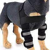 BVAGSS Perro canino Posterior Pierna Hock Parche De Compresión Curan Y Previenen Lesiones Y Esguinces Ayudan A La Artritis XH005 (L, Black)