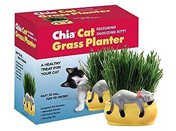Best chia cat Reviews