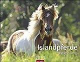 Islandpferde. Wandkalender 2020. Monatskalendarium. Spiralbindung. Format 44 x 34 cm