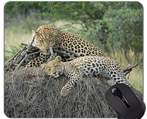 Gaming Mouse Pad, Leopard Katzenfamilie Mauspads und Leopard Maus-Pads
