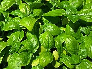 Bulk Organic Basil Seeds (1 lb)