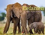 Elefanten - die sanften Riesen Afrikas 2020, Wandkalender im Querformat (54x42 cm) - Tierkalender mit Monatskalendarium
