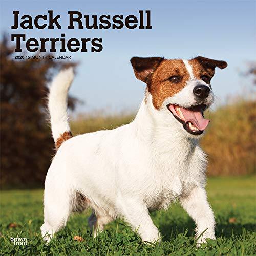 Jack Russell Terriers 2020 Calendar