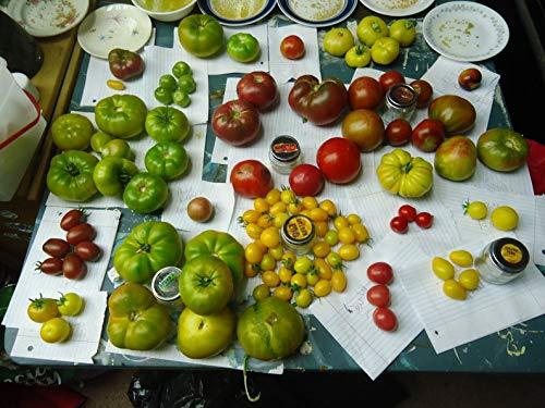 UEYR Seeds of Life Tomatensorte 12 Sorten packen!