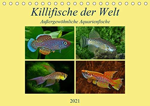 Killifische der WeltCH-Version (Tischkalender 2021 DIN A5 quer)