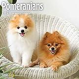 2021 Pomeranians Wall Calendar...