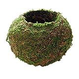 LOVIVER Maceta Verde Macetero Natural Tejido Musgo Bola Bonsái Jardín Decoración Flor Recipiente Pote Decoraciones para El Hogar (6 Cm, 9 Cm, 12 Cm, 15 Cm, 18 - Verde, 18 cm