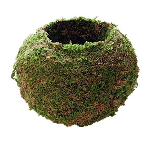 MagiDeal Kreative Mooskugel Form Blumentopf Pflanzer für Sukkulenten Pflanzen - 6 cm